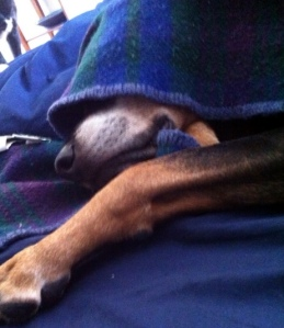 Sleepy Brody
